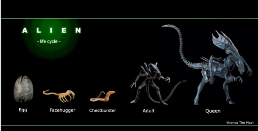 alien lifecycle.png